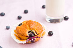 Tasty muffin Stock Photos