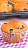 Tasty muffin Royalty Free Stock Photography