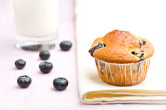 Tasty muffin Stock Photography