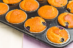 Tasty muffins Royalty Free Stock Image