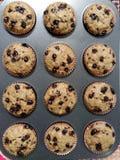 Tasty muffins stock image
