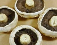 four mushrooms Stock Photo