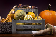 Tasty mushrooms, corn and pumpkin Stock Photography