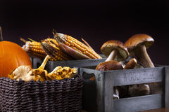 Tasty mushrooms, corn and pumpkin Royalty Free Stock Image