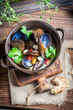 Tasty mussels with garlic and red peppers Royalty Free Stock Photos