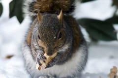 Tasty Nut Stock Photo