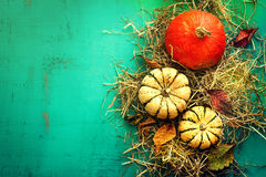Tasty Orange Pumpkins on Hay Autumn Leaves on Beautiful Turquoise Background Top View royalty free stock images