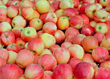 Tasty organic apples. On a market stall Royalty Free Stock Photo