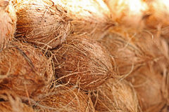 Coconuts at local market Royalty Free Stock Image