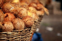 Tasty organic coconuts at local market in India Royalty Free Stock Photography