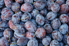 Tasty organic plums Royalty Free Stock Image