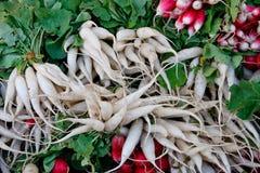 Tasty organic radish Stock Image