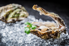 Tasty oyster in shell Stock Images