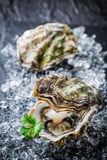Tasty oyster in shell on crushed ice Royalty Free Stock Image