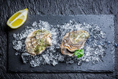 Tasty oysters Royalty Free Stock Photography