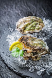 Tasty oysters on crushed ice ready to eat Stock Photo