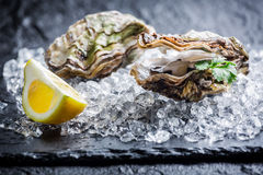 Tasty oysters on ice. And black rock stock photos