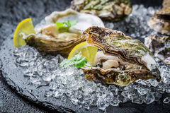 Tasty oysters on ice with lemon. On black rock Stock Photography