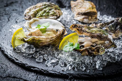 Tasty oysters on ice with lemon. Tasty oysters on ice and black rock with lemon Royalty Free Stock Photos