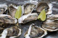 Tasty oysters on ice with lemon. Wood background Stock Image