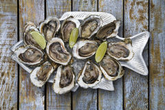 Tasty oysters on ice with lemon. Wood background Royalty Free Stock Photography