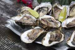 Tasty oysters on ice with lemon. Wood background Stock Images