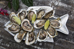 Tasty oysters on ice with lemon. Wood background Royalty Free Stock Photo