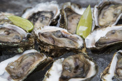 Tasty oysters on ice with lemon. Wood background Stock Photos