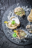 Tasty oysters on ice ready to eat Royalty Free Stock Images