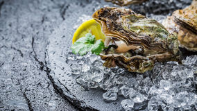 Tasty oysters ready to eat Stock Image