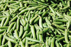 Tasty Peas. Counter with fresh green peas royalty free stock image