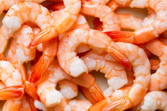 Tasty prawns Stock Image