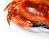Tasty prepared crab Royalty Free Stock Photo
