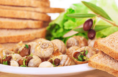 Tasty prepared escargot Stock Photo