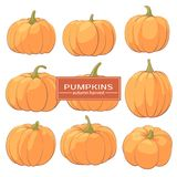 Tasty Pumpkins on a white background. Beautiful pumpkins for holiday on a white background with a place for a signature Royalty Free Stock Photo