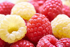 Tasty raspberries Stock Photos