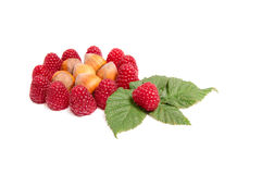 Tasty raspberries and nuts on a white. Royalty Free Stock Image