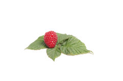 Tasty raspberry on the green leaves. Stock Photos