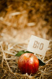 Tasty red apple on straw, tagged as Royalty Free Stock Photos