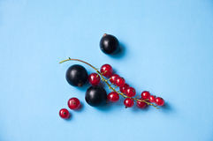 Tasty red and black currant berries on blue. Bright and delicious red and black currant berries against blue background in studio environment Stock Images