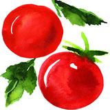 Tasty red tomatoes. Watercolor painting on white background Stock Photo