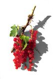 Tasty redcurrants. Bunch of tasty redcurrants Royalty Free Stock Image