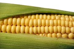 Tasty ripe corn Stock Photo