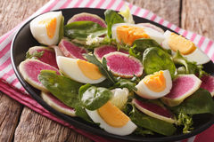 Tasty salad of watermelon radishes, eggs, spinach and herbs clos Stock Photos