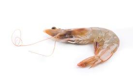 Tasty shrimp Royalty Free Stock Images
