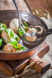 Tasty snails with parsley and garlic butter Royalty Free Stock Image