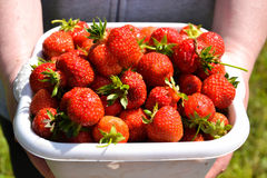 Tasty strawberries. Fresh and new strawberries are kept in a box Stock Photo