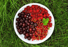 Tasty summer berries Stock Photo