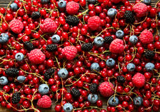 Tasty summer fruits. Red currant raspberries mulberry bilberry. Rustick stile.  Top view. Mix of different berries Royalty Free Stock Photos