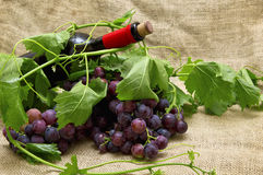 Tasty sweet grapes with red wine in bottle. Royalty Free Stock Image